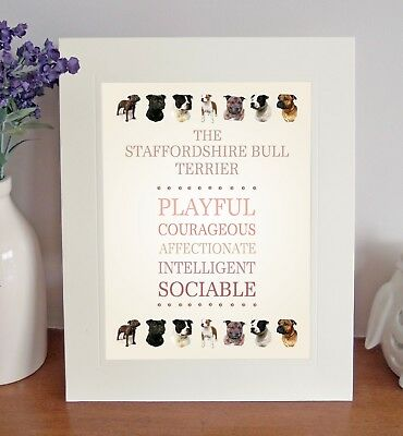 Staffordshire Bull Terrier 8 x 10 BREED TRAITS Picture 10x8 Dog Print Fun Gift