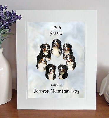 "Bernese Mountain Dog 'Life is Better' 10"" x 8"" Mounted Picture Print Pet Gift"