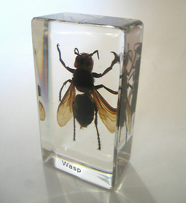 Wasp Specimen Glass Block Halloween Paperweight Desk Decor Odd Gift