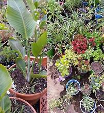 Big Garden Sale-100's of Plants from $2 - open to view every day Salisbury Plain Salisbury Area Preview