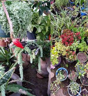 Big Garden Sale -100's of Plants from $2 - open to view every day