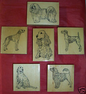 Miniature Pinscher Puppies For Sale In Australia   Apps Directories