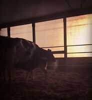 Dairy farm looking for spring help through to fall **students