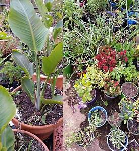 Big Garden Sale -100's of Plants from $2 - open to view every day Salisbury Plain Salisbury Area Preview