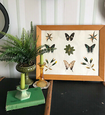 Rare Buterfly and Floral Collage