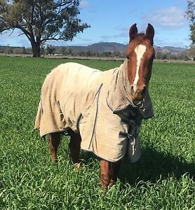 Horse Agistment Available Moore Creek Tamworth Surrounds Preview