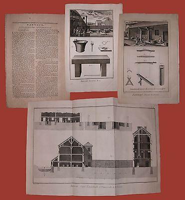 Tanneur Conciatore di pelli Diderot et D'Alembert 1762 Tav 12 Tannerie Tannino