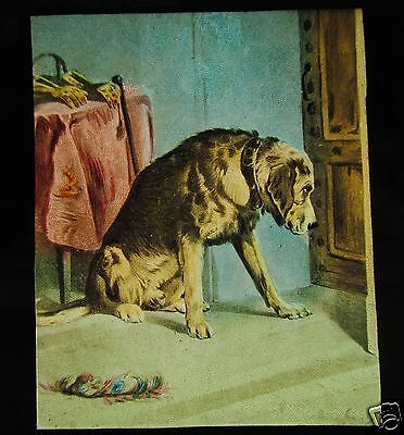 Glass Magic Lantern Slide A DOG BY THE DOOR C1890 VICTORIAN DOGS