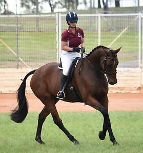 Competitive Dressage Mount Gatton Lockyer Valley Preview