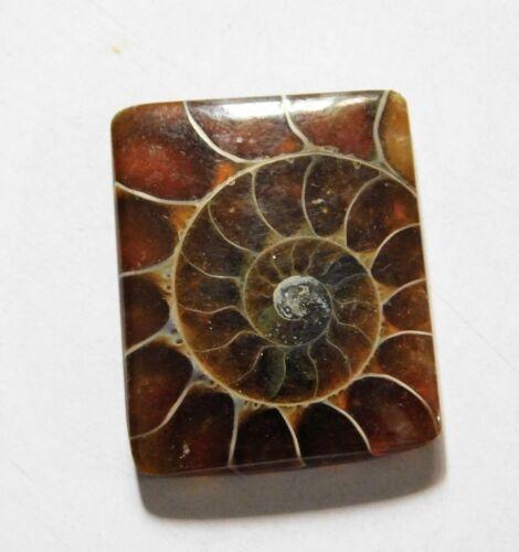 33.35 Cts Natural Ammonite Loose Cabochon Gemstone 27X22X5MM A-12