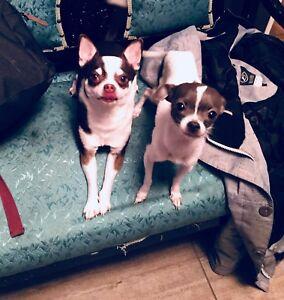 Bruno et Ginette sont à vendre