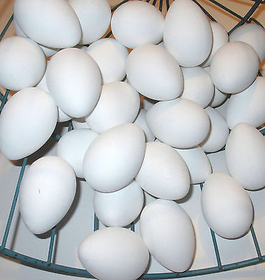 12 New White Faux Chicken Eggs Home Decor Crafts Free Shipping USA!