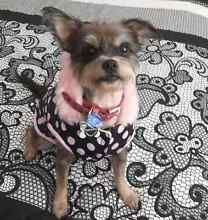 Dog Sitter Available Merrimac Gold Coast City Preview