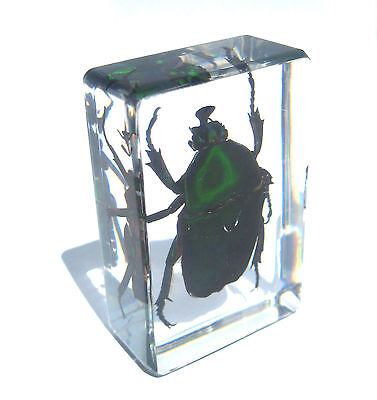 Green Beetle Insect Specimen in Glass Block Paperweight Oddities Desk Decor S