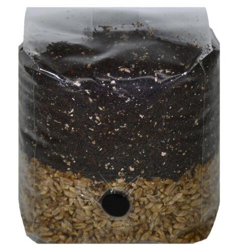 Mini All in One Mushroom Grow Bag