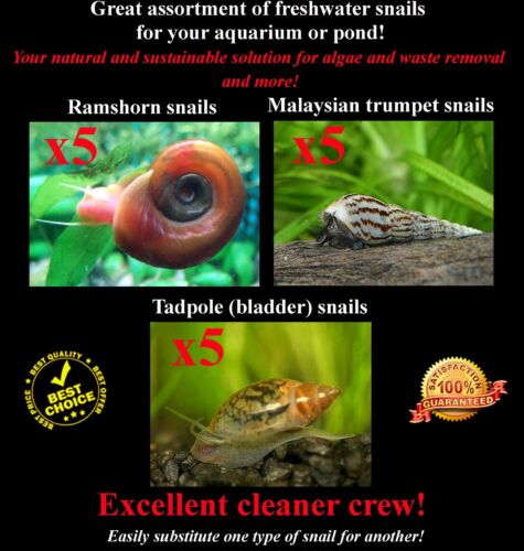 15+Live Cleaner/Feeder Snails 3 types Ramshorn, Malaysian, Pond BUY2GET1FREE!