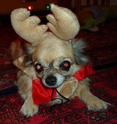 Hundekostüm Hunde Kostüm Rentier Geweih + Halsband Gr. S für - Kostüm Für Chihuahuas