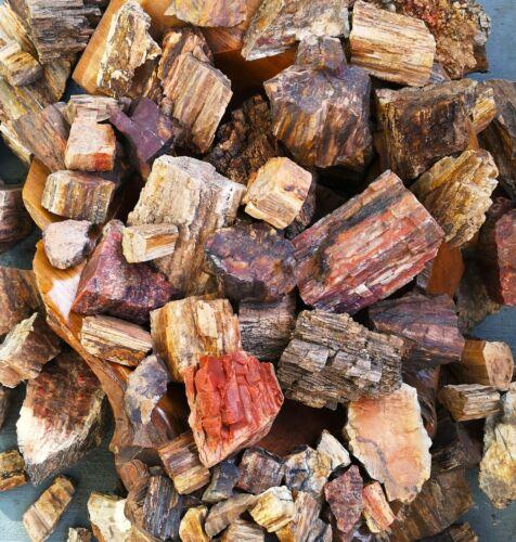 Natural Petrified Wood Rough 7oz/ 180g min.  Parcels, unpolished raw