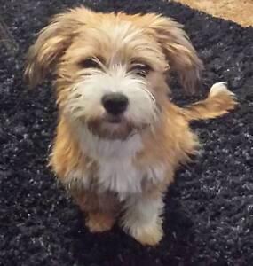 Dog Park Walks Daily (BIRRONG AREA) Regents Park Auburn Area Preview