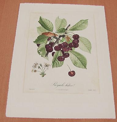Poiteau, Pierre - Antoine , Royal native , Turpin - pinx  &  Bouquet - Sculp