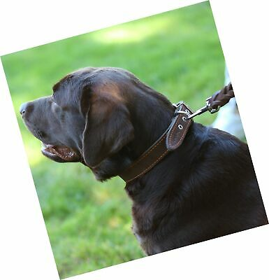 Thick Genuine Leather Dog Collar, Cotton Padded, 1.25 Wide. Brown - $37.99