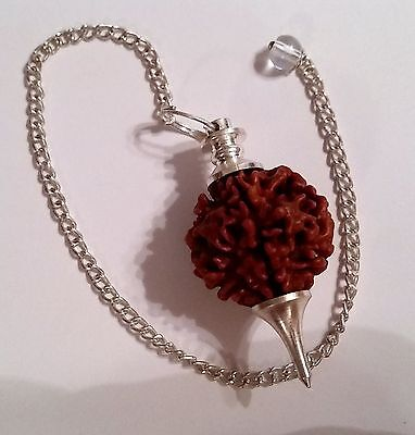 Natural Rudraksha Seed Pendulums with Silver Colored Metal Alloy Parts