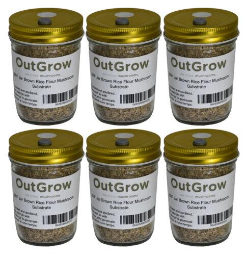 BRF Jars Brown Rice Flour Mushroom Substrate (6 Pack)