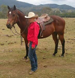 MAGNIFICENT QUARTER HORSE GELDING Gympie Gympie Area Preview