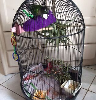 Baby conure plus cage Helensvale Gold Coast North Preview