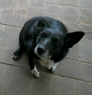 Wanted: REWARD missing dog