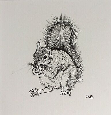 Original Artwork by Sungy Drawing Standing Feeding Hunting Squirrel