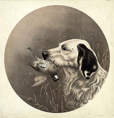 "1911 Drawing, BIRD DOG, Pointer, Hunting, antique,  20""x20"" Art Print"