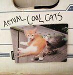Actualcoolcats Collectibles