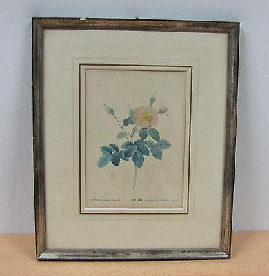Kol. Lithographie  ROSIER eent feuilles à fleurs simples - Pierre-Joseph Redouté