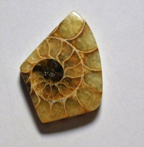 27.20 Cts Natural Ammonite Loose Cabochon Gemstone 32.5X24.5X5.5mm 07