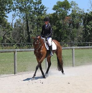 Seriously Tallented! Eventing, Dressage, Showjumping or Show! Maroochydore Maroochydore Area Preview