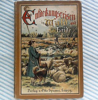 Toll illustriertes, altes Kinderbuch Entdeckungsreisen in Wald und Heide v. 1900