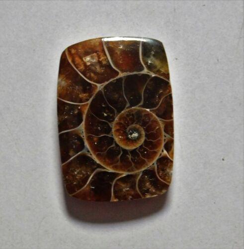18.300 Cts Natural Ammonite Loose Cabochon Gemstone 24X17X4mm 11