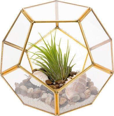 Mindful Design Geometric Dodecahedron Desktop Garden Planter Glass - Desktop Garden