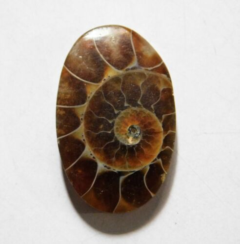 20.75 Cts Natural Ammonite Loose Cabochon Gemstone 28X17.5X4.5MM A-09