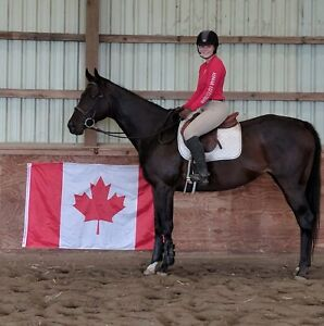Beautiful thoroughbred mare for sale. PRICE REDUCED!!