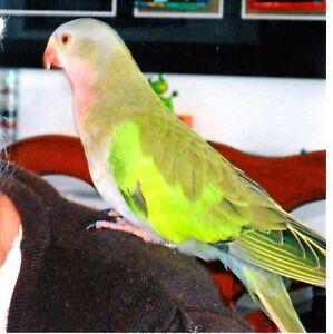 Lost: Princess Parrot Port Macquarie Port Macquarie City Preview