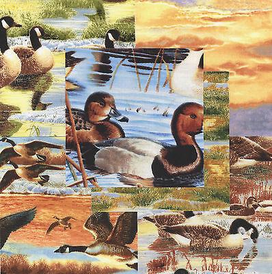 Duck Duck Goose 30 4  Fabric Squares Cotton Quilt Quilting Nature Wildlife