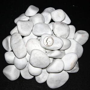30lbs 10lbs snow white natural rock stone pebble garden for Large white garden rocks