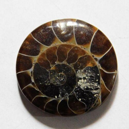18.20 Cts Natural Ammonite Loose Cabochon Gemstone 21.5X21.5X4MM A-10
