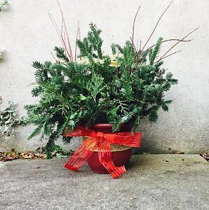 Christmas arrangement - fir, cedar & red dogwood London Ontario image 1