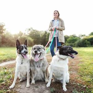 Dog walking and pet sitting service Griffith South Canberra Preview