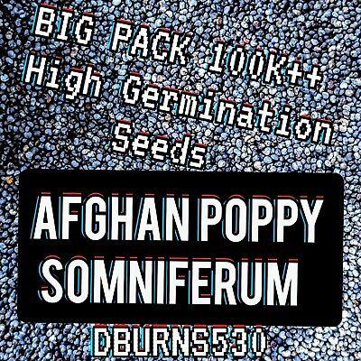 100, 000++ Afghan Blue Poppy SOMNIFERUM Seeds BIG PACK! - ONE OZ ~~DBURNS530~~
