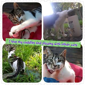 Looking for a forever Loving Home Eastgardens Botany Bay Area Preview