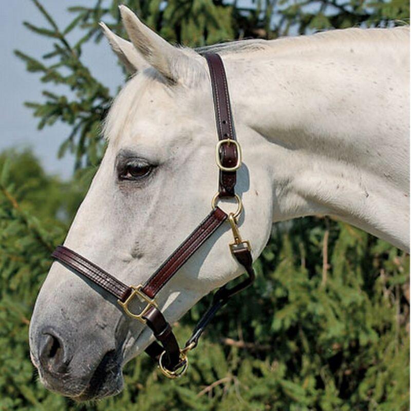 Horse Size Premium Triple Stitched Leather Halter Havana Brown w/ Brass Hardware